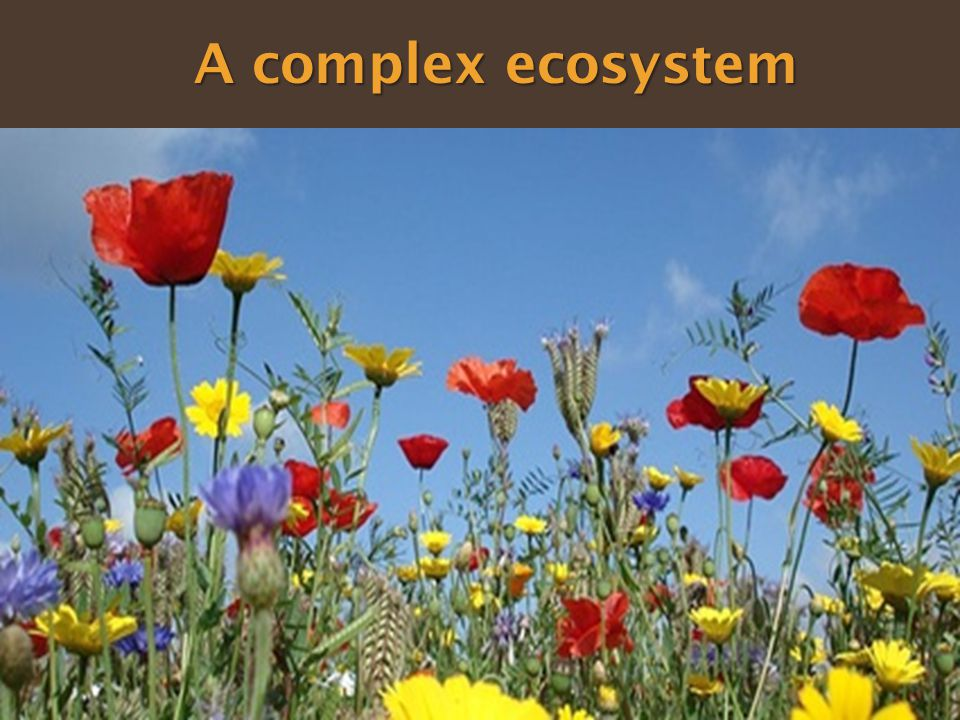 A complex ecosystem