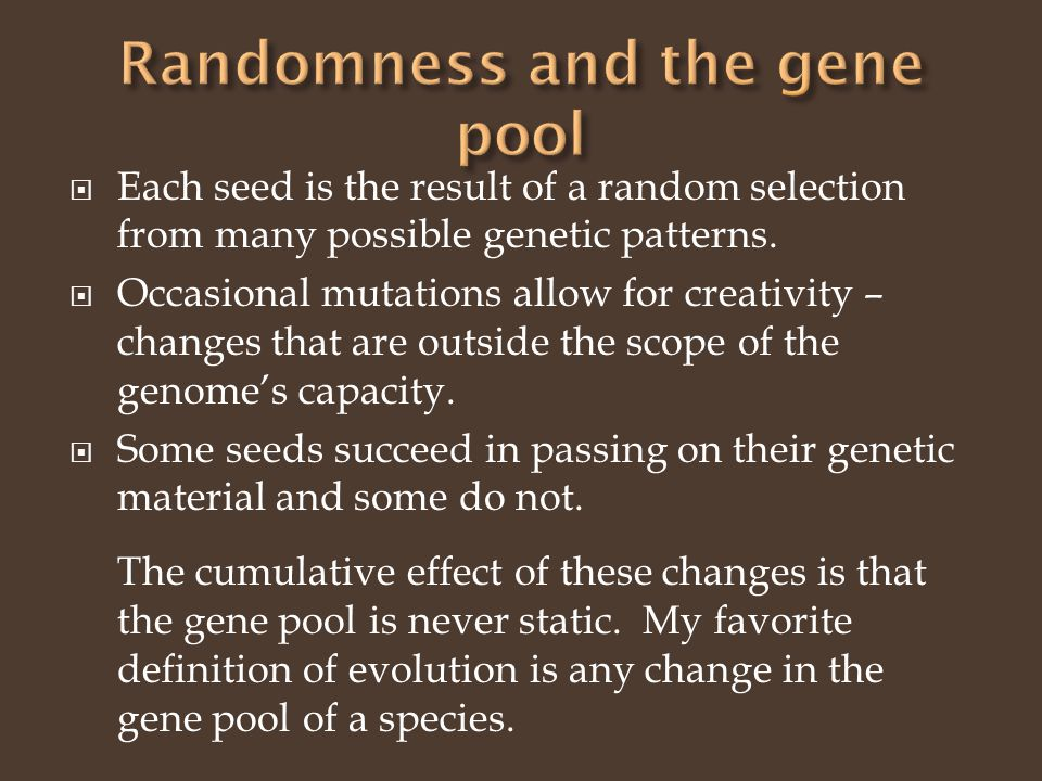 Each seed is the result of a random selection from many possible genetic patterns.