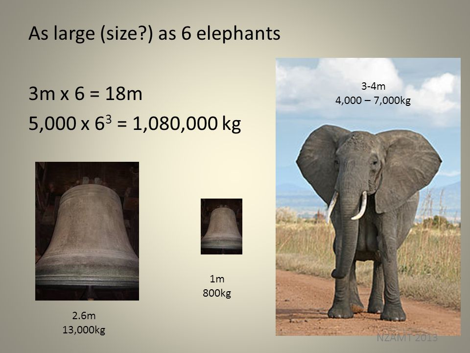 As large (size?) as 6 elephants 3m x 6 = 18m 5,000 x 6 3 = 1,080,000 kg 2.6m 13,000kg 1m 800kg 3-4m 4,000 – 7,000kg NZAMT 2013
