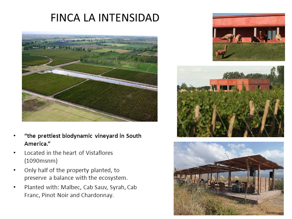 FINCA LA INTENSIDAD the prettiest biodynamic vineyard in South America. Located in the heart of Vistaflores (1090msnm) Only half of the property plant