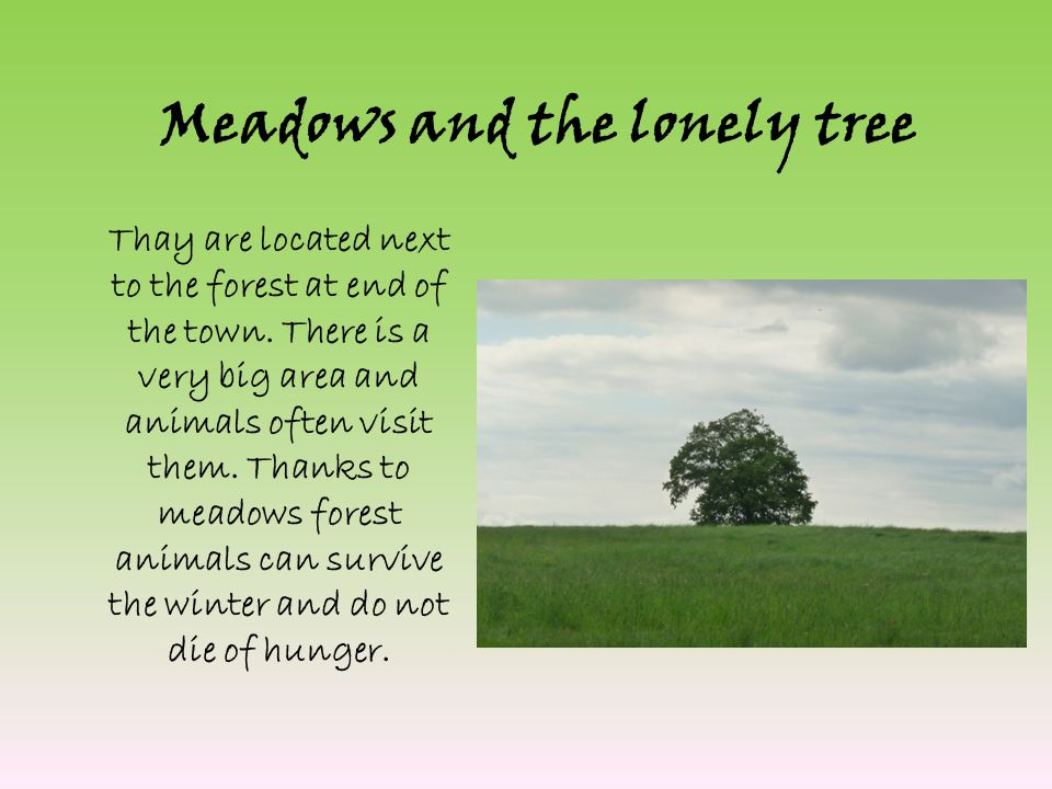 Meadows and the lonely tree Thay are located next to the forest at end of the town.