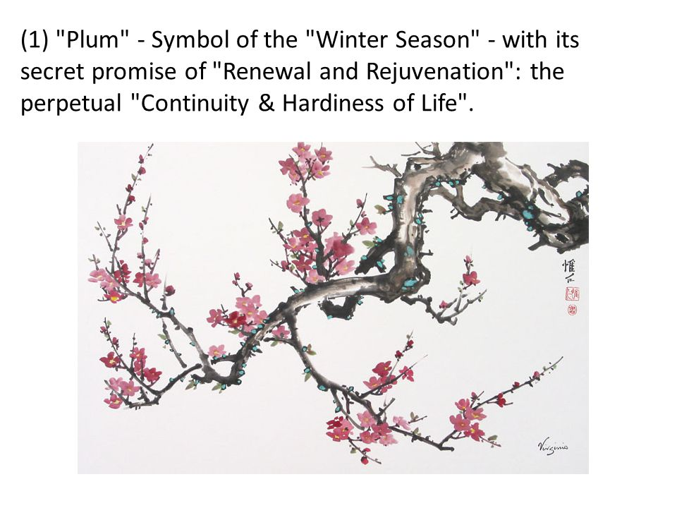 (1) Plum - Symbol of the Winter Season - with its secret promise of Renewal and Rejuvenation : the perpetual Continuity & Hardiness of Life .