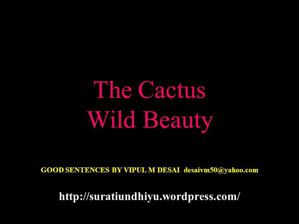 The Cactus Wild Beauty GOOD SENTENCES BY VIPUL M DESAI desaivm50@yahoo.com http://suratiundhiyu.wordpress.com/