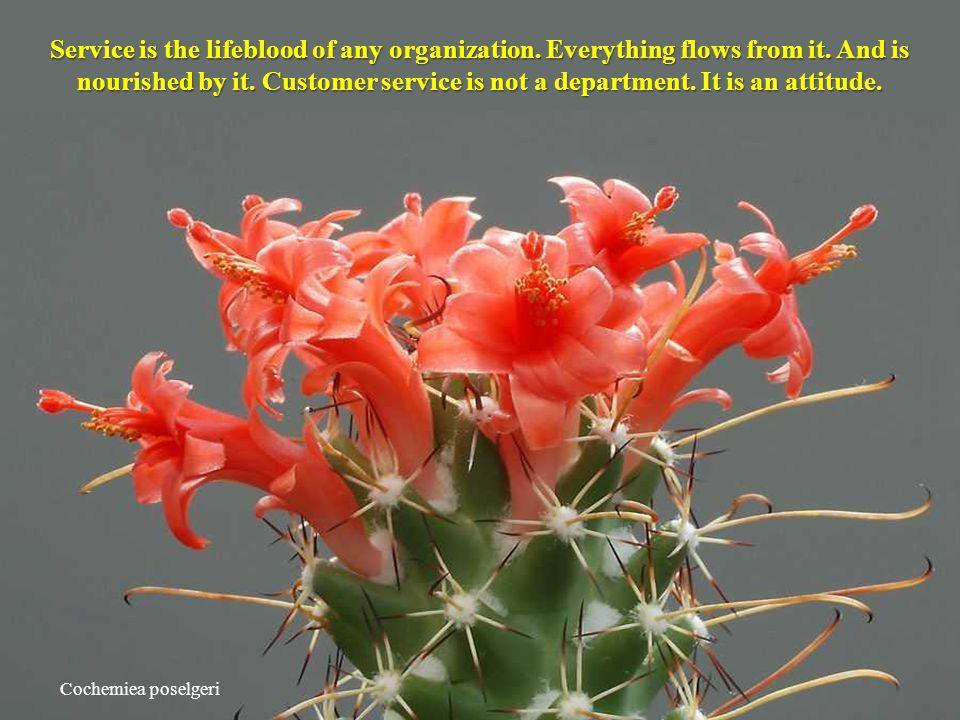 Cochemiea poselgeri Service is the lifeblood of any organization.