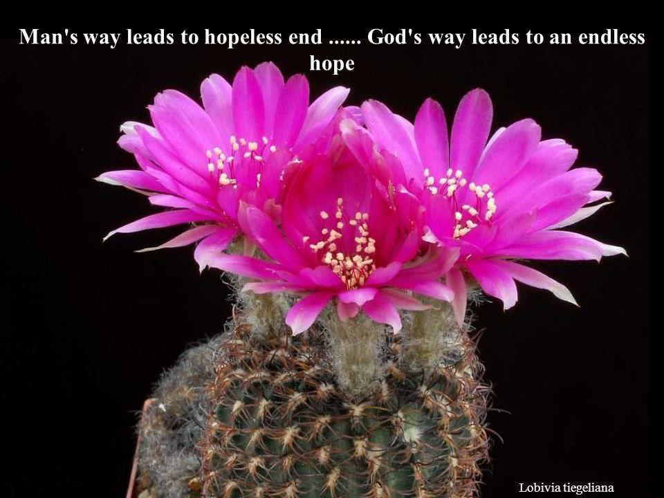 Lobivia tiegeliana Man s way leads to hopeless end...... God s way leads to an endless hope