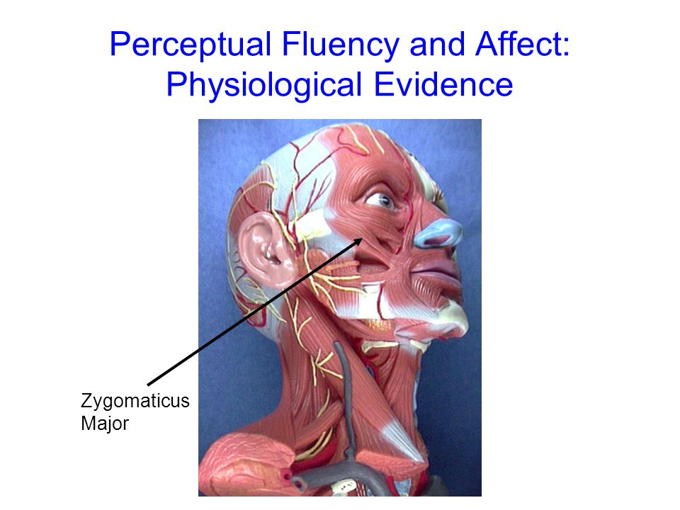 © POSbase 2004 Perceptual Fluency and Affect: Physiological Evidence Zygomaticus Major