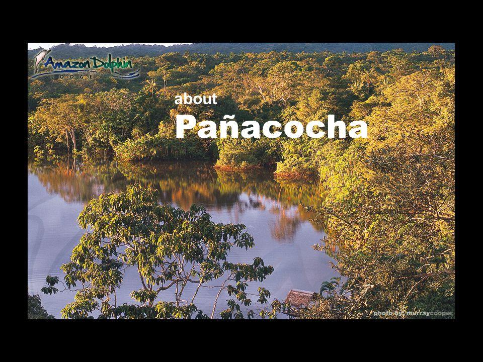 about Pañacocha