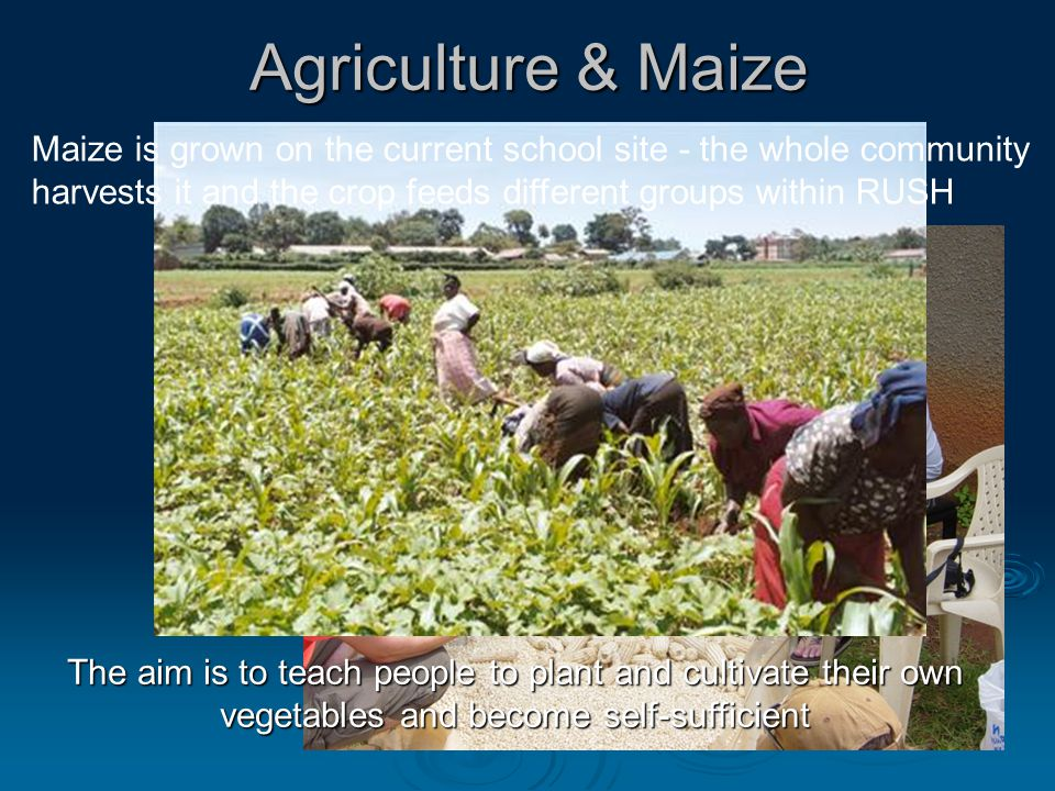 Agriculture & Maize The aim is to teach people to plant and cultivate their own vegetables and become self-sufficient Maize is grown on the current school site - the whole community harvests it and the crop feeds different groups within RUSH
