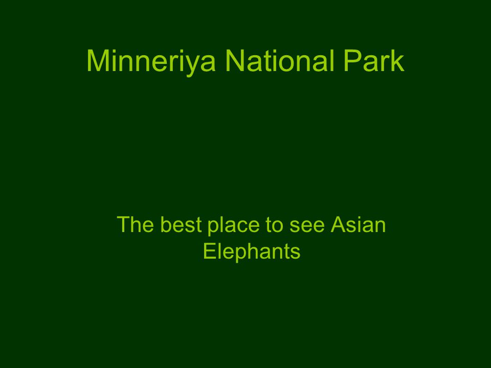 Minneriya National Park The best place to see Asian Elephants