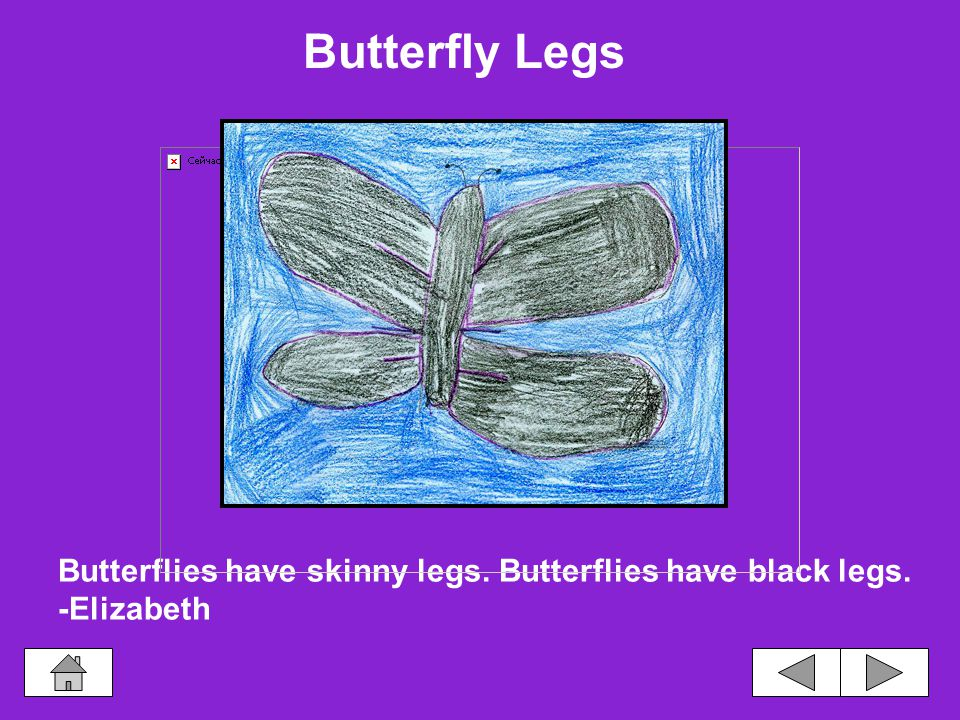 An adult butterfly has three legs attached to its thorax.