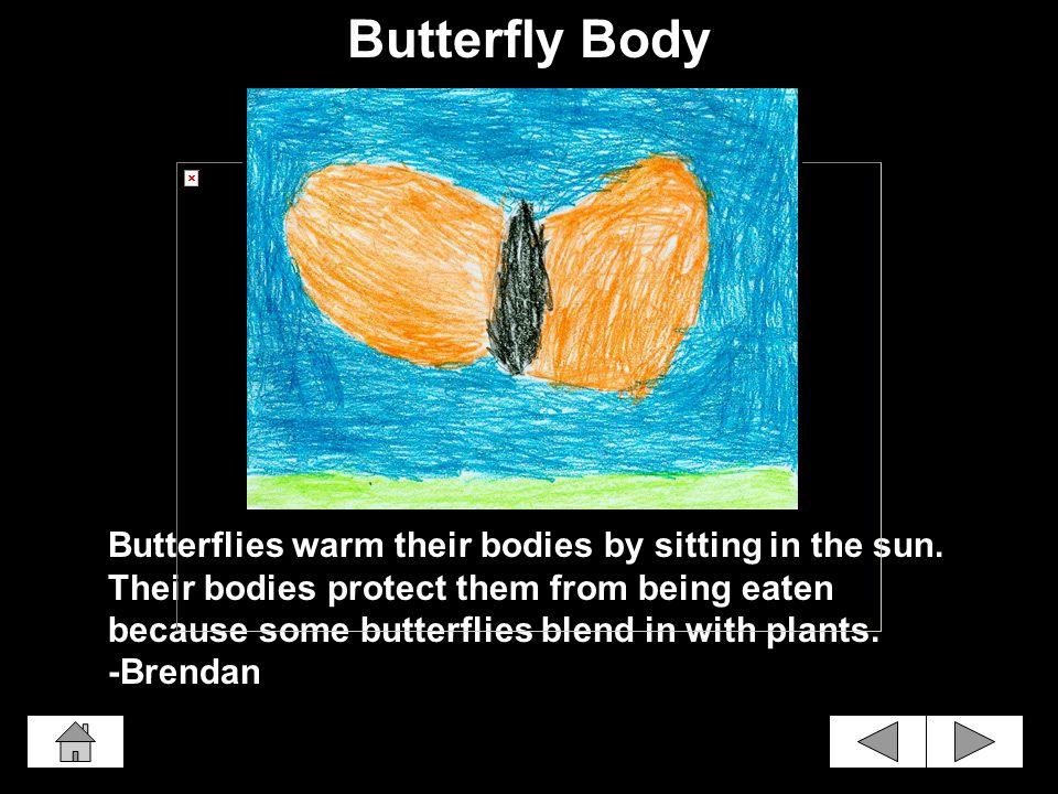 Butterflies have skinny legs. Butterflies have black legs. -Elizabeth Butterfly Legs