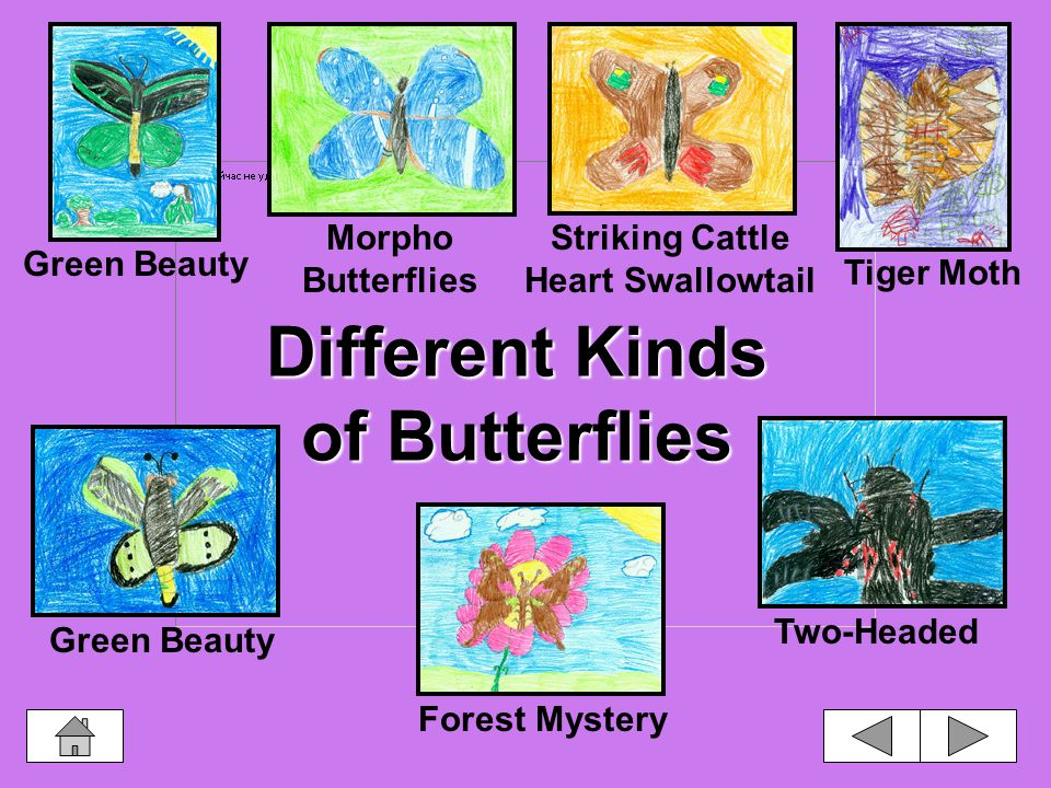 Butterfly and moth caterpillars have fourteen body segments. -Hunter Caterpillar Facts