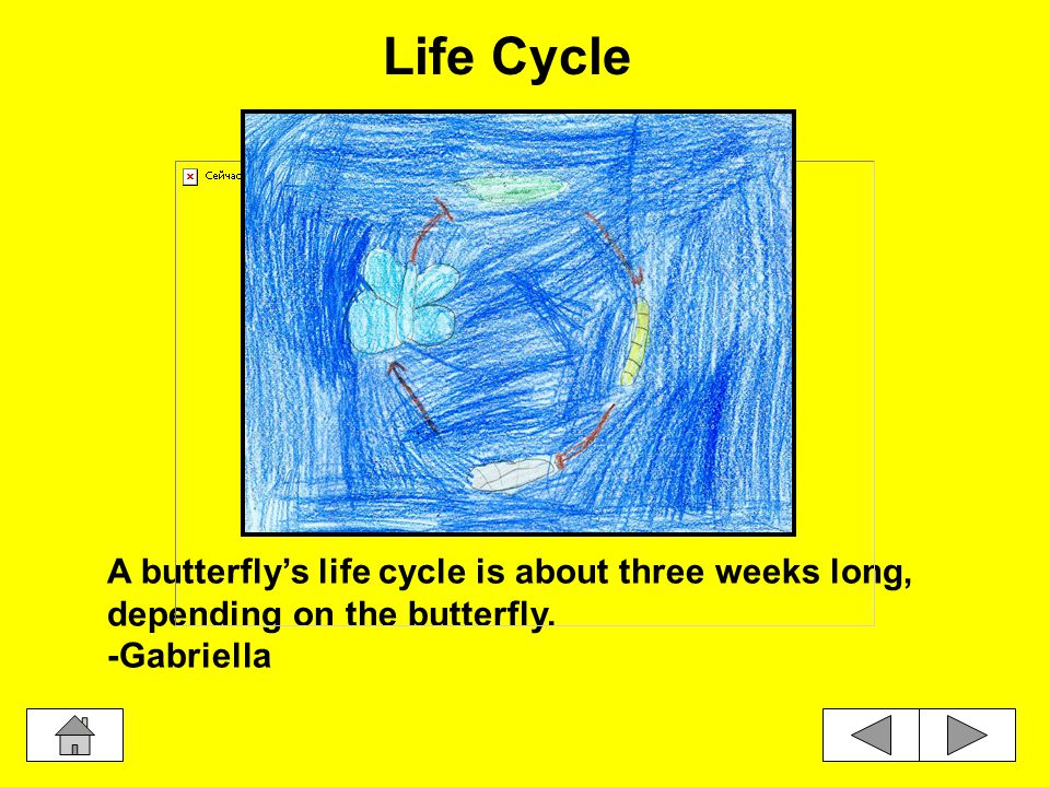 This is the final stage of the life cycle. The pupa is now a butterfly. -Jaekwon Butterfly