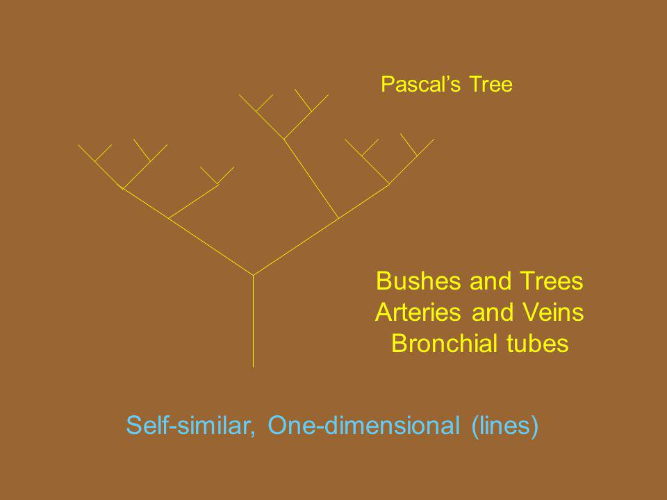 Bushes and Trees Arteries and Veins Bronchial tubes Self-similar, One-dimensional (lines) Pascals Tree