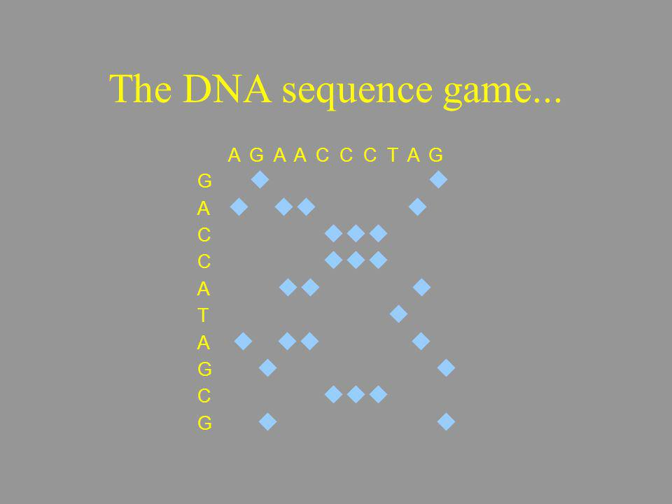 A G A A C C C T A G G A C A T A G C G The DNA sequence game...