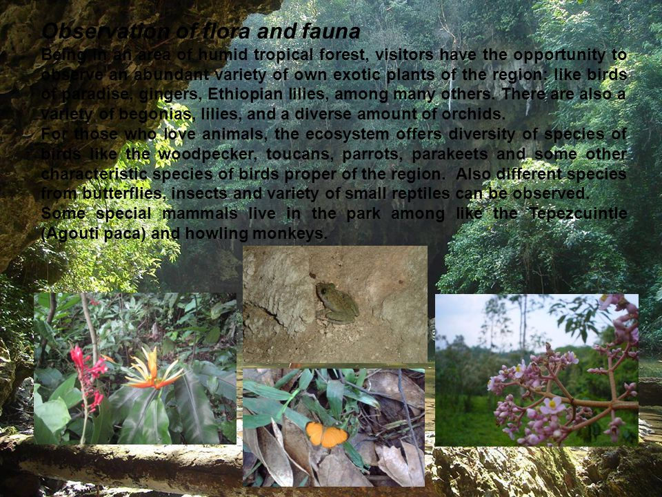 Observation of flora and fauna Being in an area of humid tropical forest, visitors have the opportunity to observe an abundant variety of own exotic p