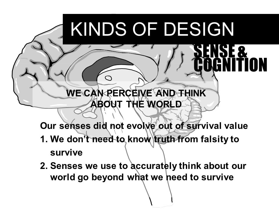KINDS OF DESIGN SENSE & COGNITION WE CAN PERCEIVE AND THINK ABOUT THE WORLD Our senses did not evolve out of survival value 1.