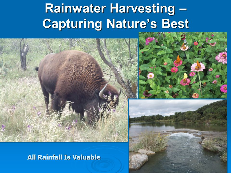 Renewed Interest in Collecting Rainwater *Increased Demand for a Decreasing Water Supply *Health Concerns *Reducing Storm Water Cisterns Used To Be The Standard For Many People