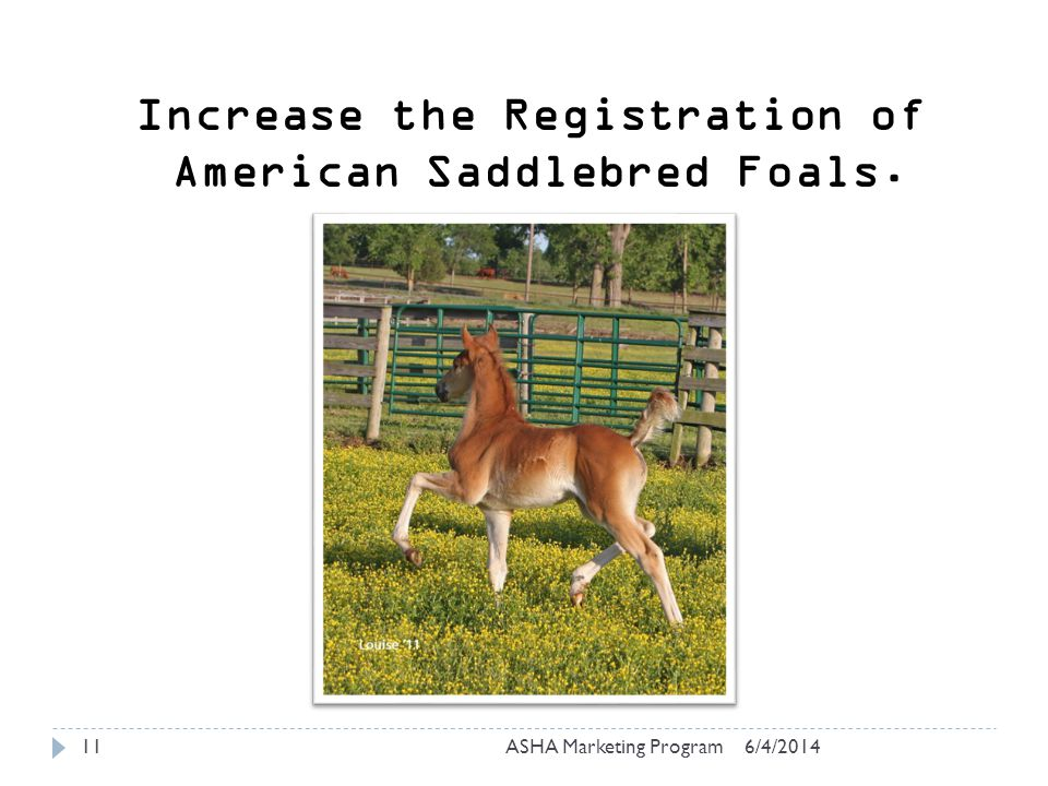 6/4/2014ASHA Marketing Program11 Increase the Registration of American Saddlebred Foals.