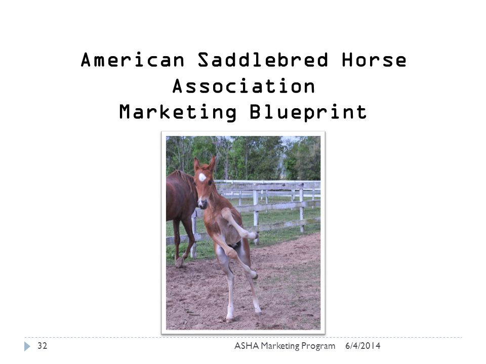 6/4/2014ASHA Marketing Program32 American Saddlebred Horse Association Marketing Blueprint