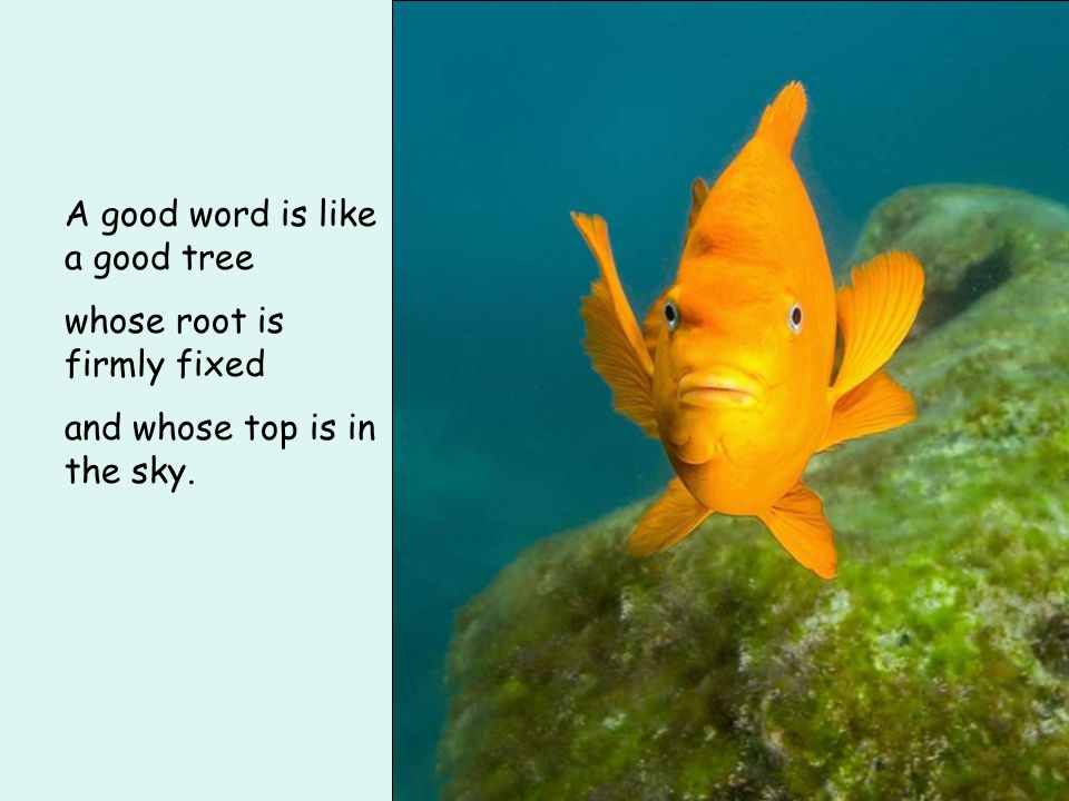 A good word is like a good tree whose root is firmly fixed and whose top is in the sky.