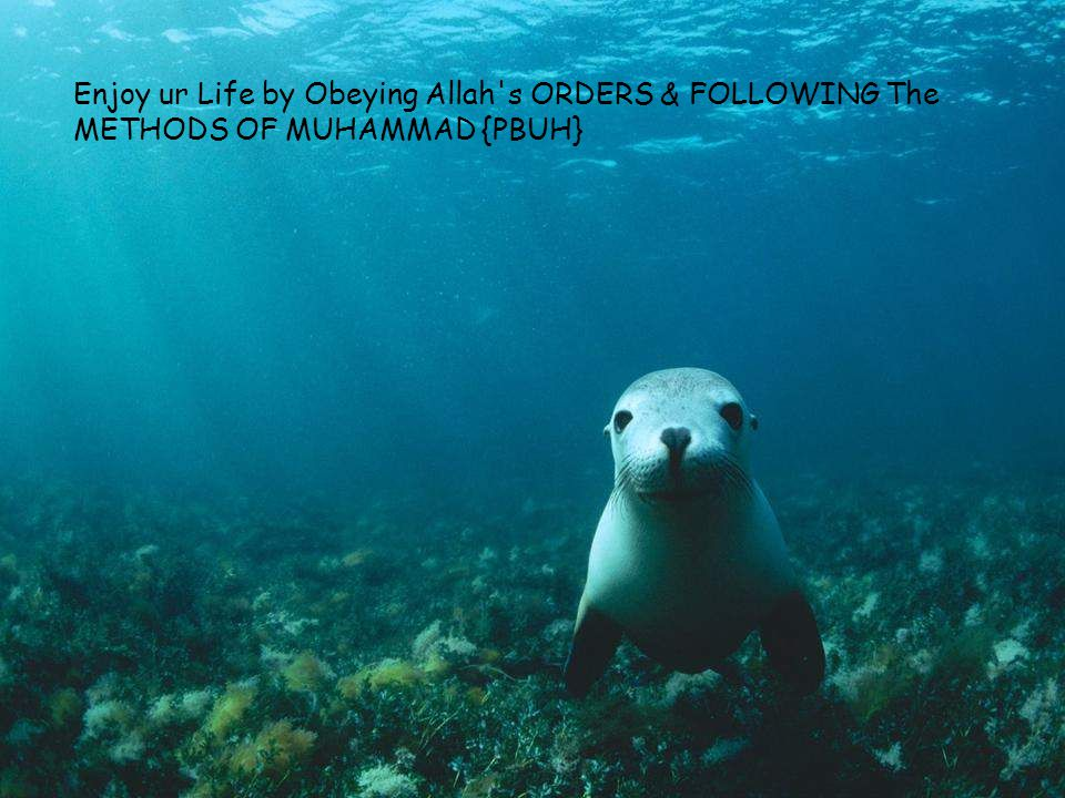 Enjoy ur Life by Obeying Allah s ORDERS & FOLLOWING The METHODS OF MUHAMMAD {PBUH}