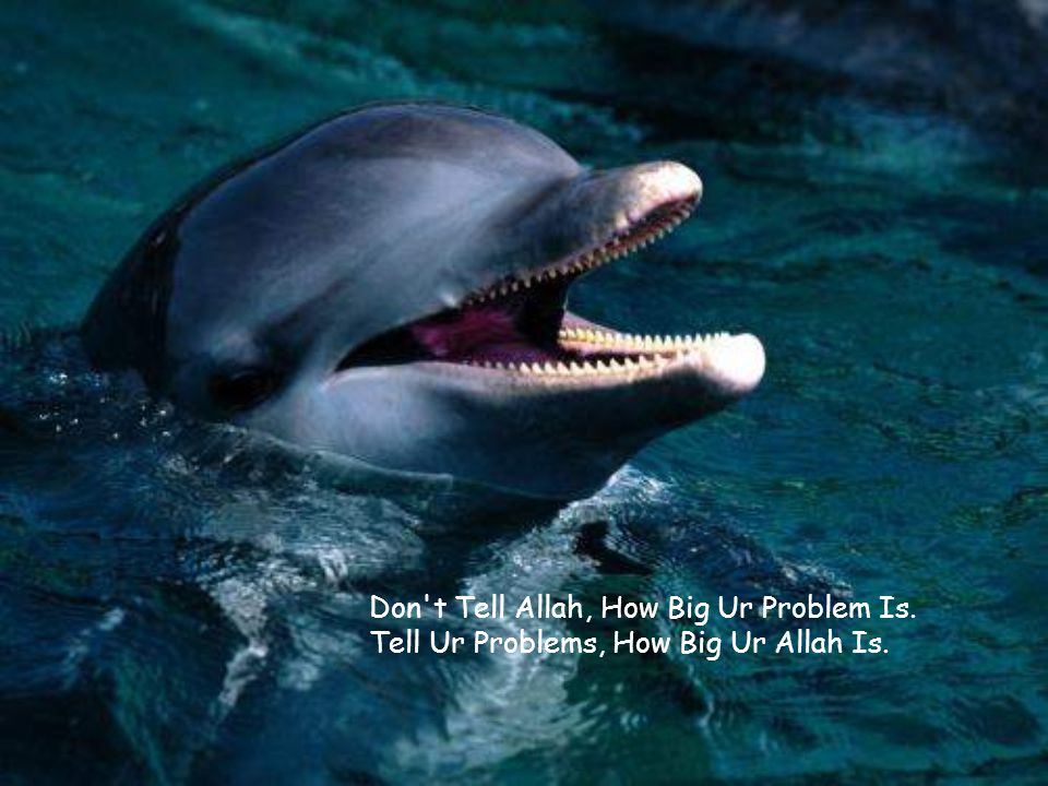 Don t Tell Allah, How Big Ur Problem Is. Tell Ur Problems, How Big Ur Allah Is.