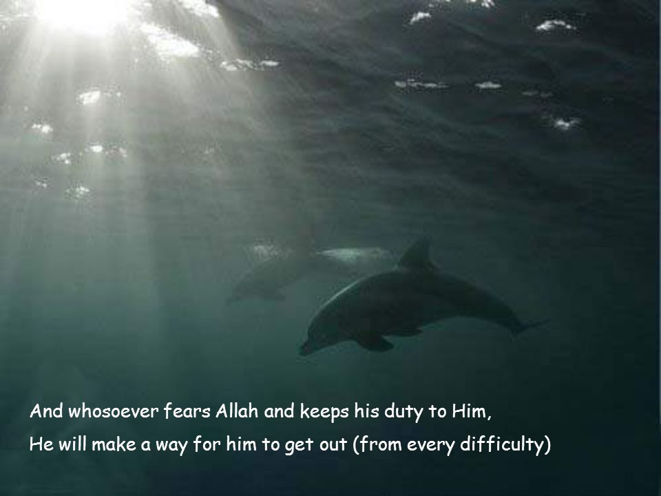 And whosoever fears Allah and keeps his duty to Him, He will make a way for him to get out (from every difficulty)
