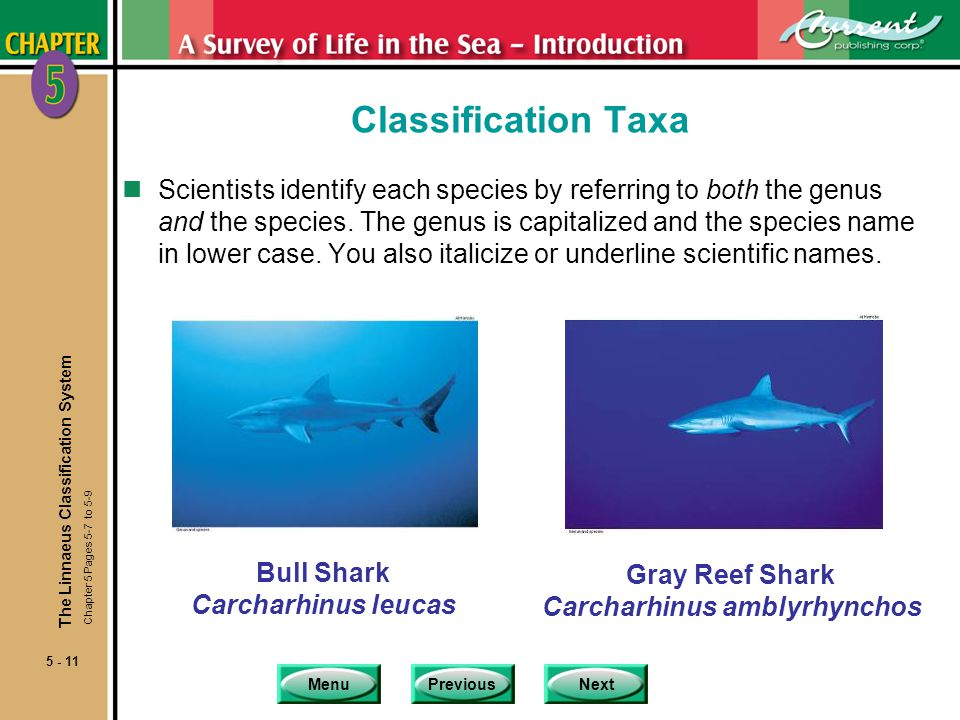 MenuPreviousNext 5 - 11 Classification Taxa nScientists identify each species by referring to both the genus and the species.
