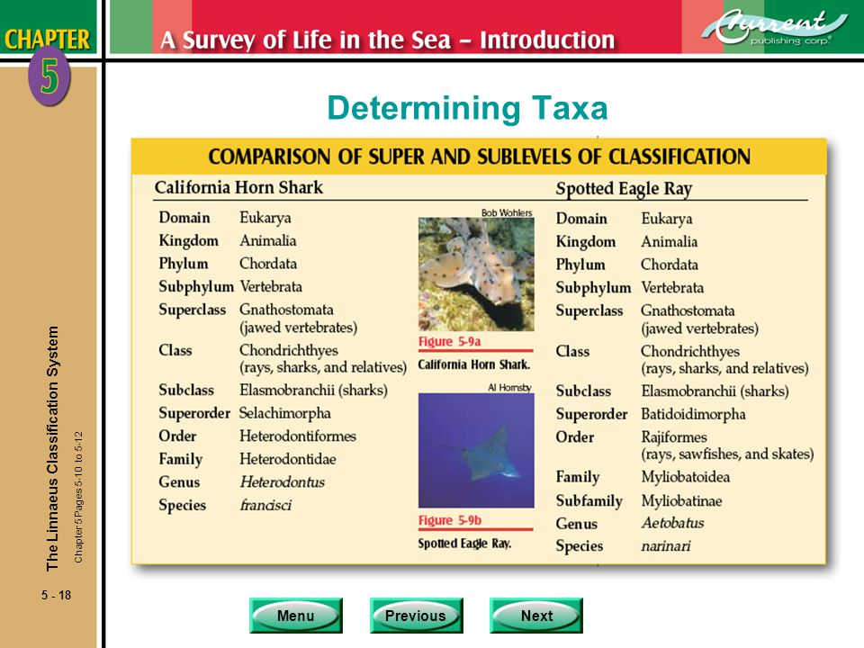 MenuPreviousNext 5 - 18 Determining Taxa The Linnaeus Classification System Chapter 5 Pages 5-10 to 5-12