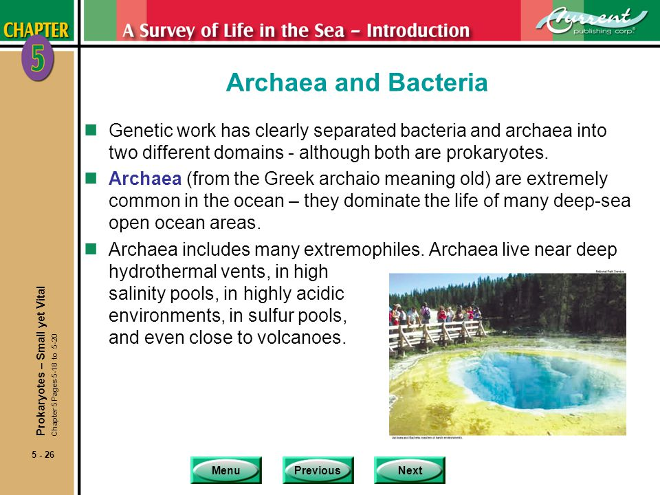 MenuPreviousNext 5 - 26 Archaea and Bacteria nGenetic work has clearly separated bacteria and archaea into two different domains - although both are prokaryotes.