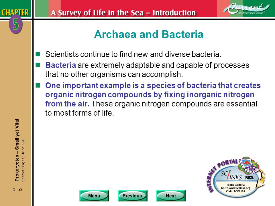 MenuPreviousNext 5 - 27 Archaea and Bacteria nScientists continue to find new and diverse bacteria. nBacteria are extremely adaptable and capable of p