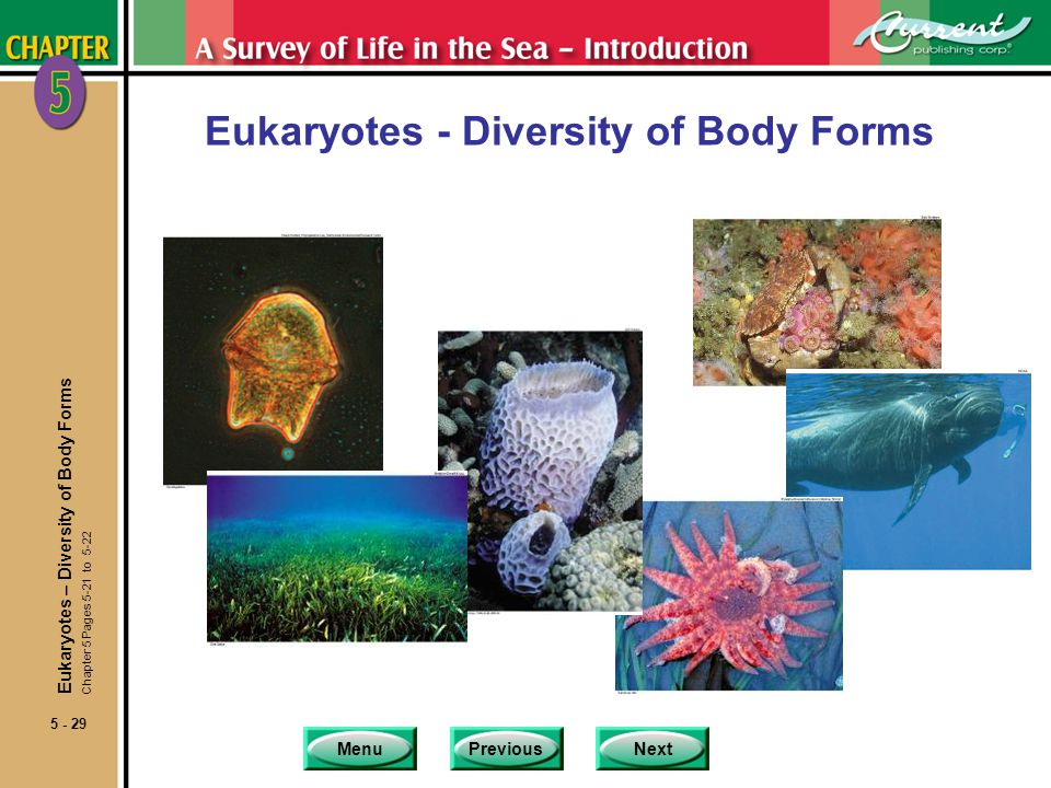 MenuPreviousNext 5 - 29 Eukaryotes - Diversity of Body Forms Eukaryotes – Diversity of Body Forms Chapter 5 Pages 5-21 to 5-22
