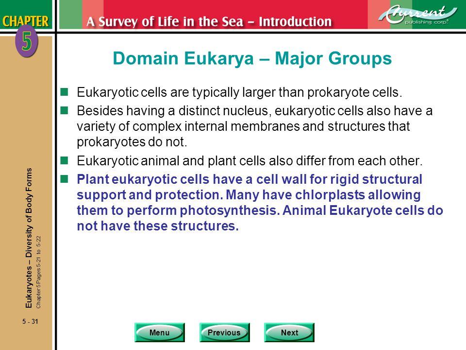 MenuPreviousNext 5 - 31 Domain Eukarya – Major Groups nEukaryotic cells are typically larger than prokaryote cells.