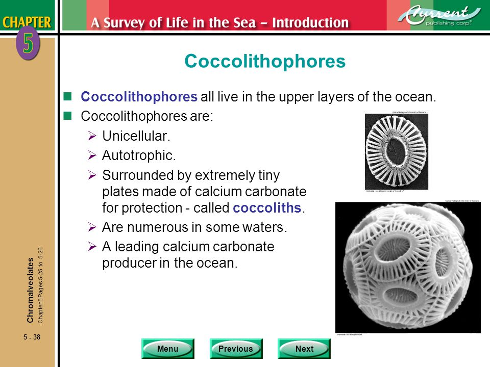MenuPreviousNext 5 - 38 Coccolithophores nCoccolithophores all live in the upper layers of the ocean.