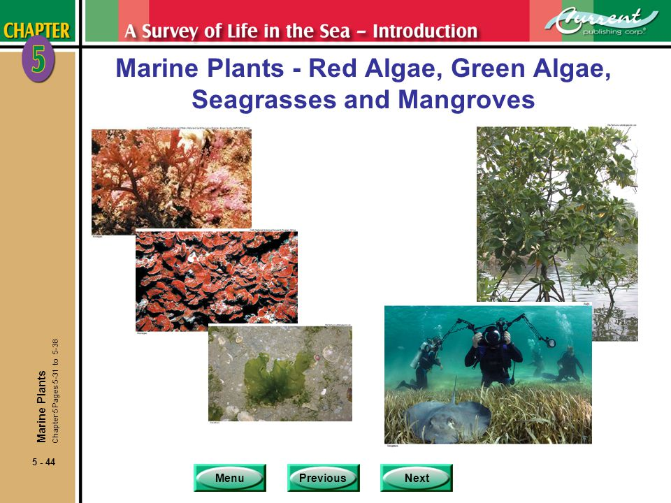 MenuPreviousNext 5 - 44 Marine Plants - Red Algae, Green Algae, Seagrasses and Mangroves Marine Plants Chapter 5 Pages 5-31 to 5-38