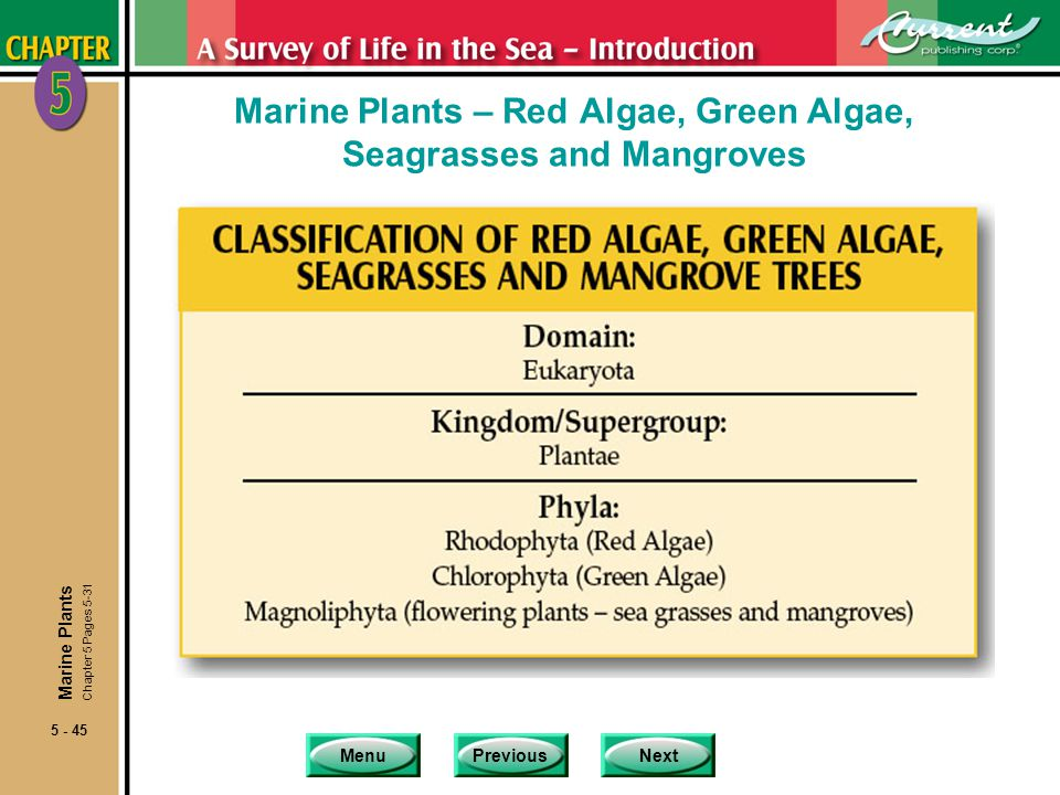 MenuPreviousNext 5 - 45 Marine Plants – Red Algae, Green Algae, Seagrasses and Mangroves Marine Plants Chapter 5 Pages 5-31