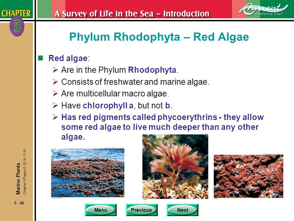 MenuPreviousNext 5 - 46 Phylum Rhodophyta – Red Algae nRed algae: Are in the Phylum Rhodophyta.