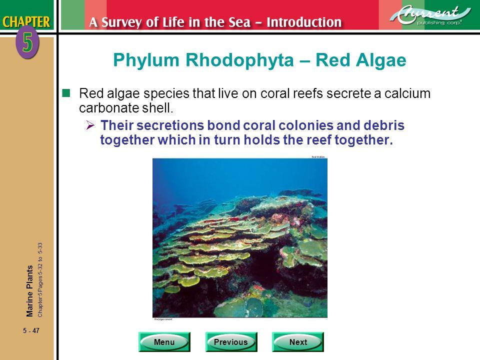 MenuPreviousNext 5 - 47 Phylum Rhodophyta – Red Algae nRed algae species that live on coral reefs secrete a calcium carbonate shell.