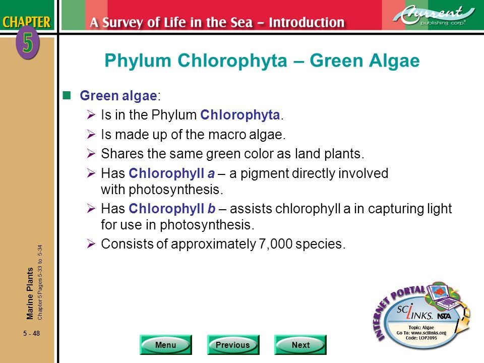 MenuPreviousNext 5 - 48 Phylum Chlorophyta – Green Algae nGreen algae: Is in the Phylum Chlorophyta.