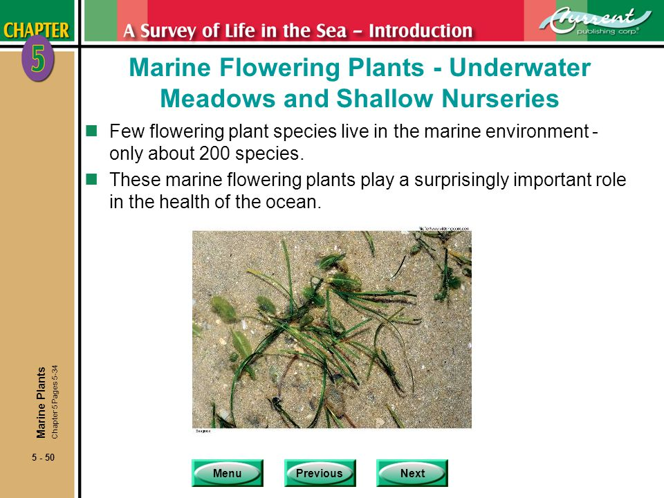 MenuPreviousNext 5 - 50 Marine Flowering Plants - Underwater Meadows and Shallow Nurseries nFew flowering plant species live in the marine environment - only about 200 species.