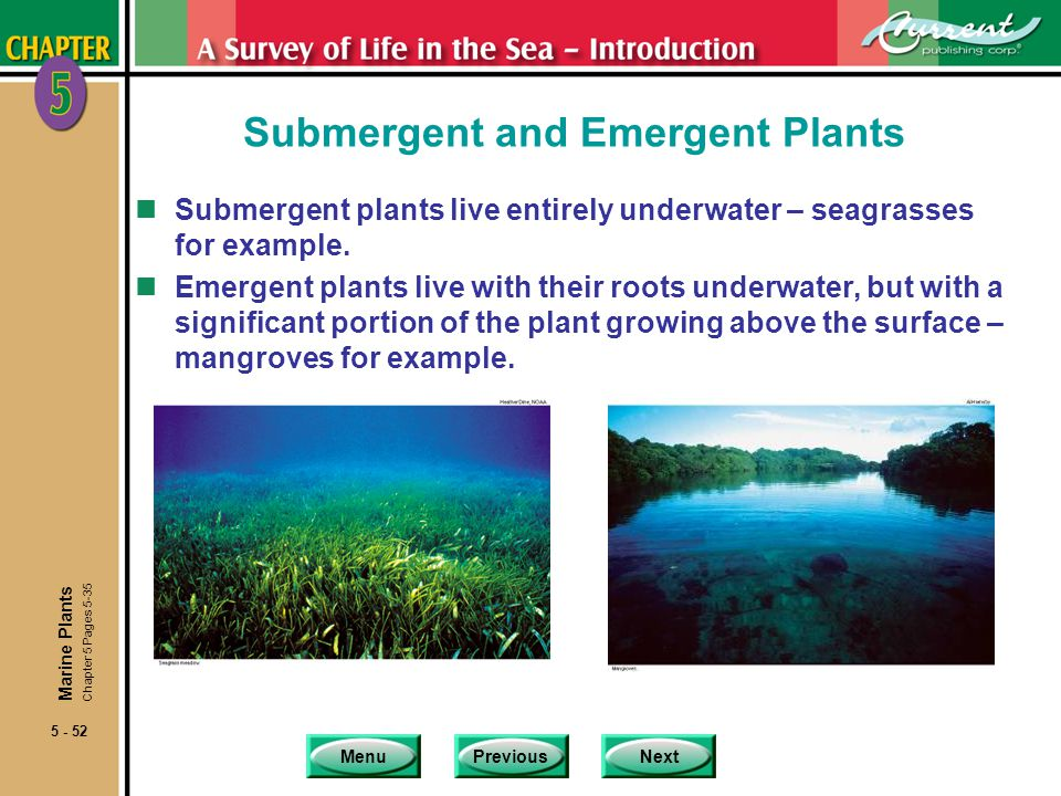 MenuPreviousNext 5 - 52 Submergent and Emergent Plants nSubmergent plants live entirely underwater – seagrasses for example. nEmergent plants live wit