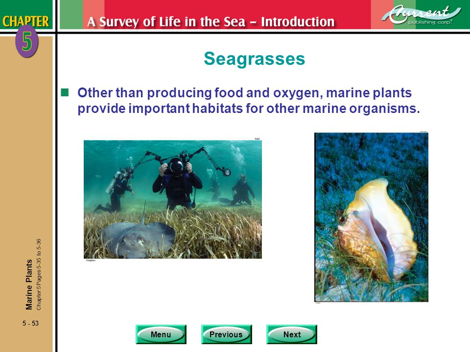 MenuPreviousNext 5 - 53 Seagrasses nOther than producing food and oxygen, marine plants provide important habitats for other marine organisms. Marine