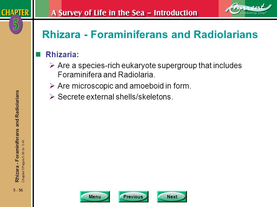 MenuPreviousNext 5 - 56 Rhizara - Foraminiferans and Radiolarians nRhizaria: Are a species-rich eukaryote supergroup that includes Foraminifera and Ra