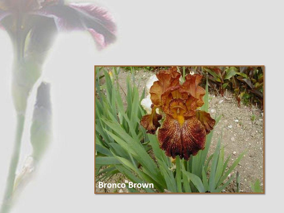 Bronco Brown