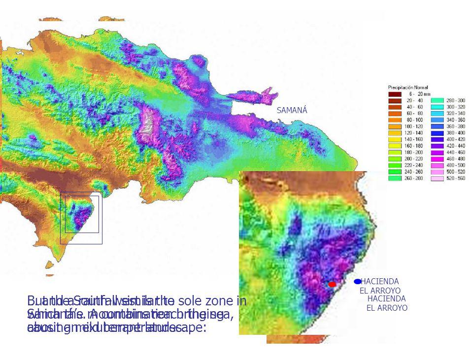 SAMANÁ HACIENDA EL ARROYO … and a rainfall similar to Samanás.