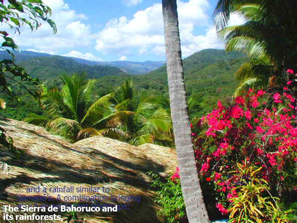 A jade-blue sea The Sierra de Bahoruco and its rainforests,