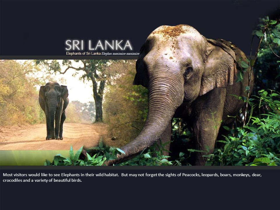 Most visitors would like to see Elephants in their wild habitat.