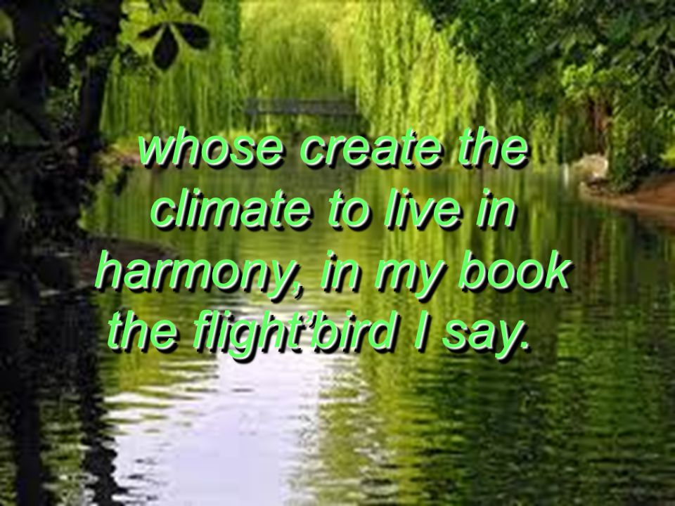 whose create the climate to live in harmony, in my book the flightbird I say. whose create the climate to live in harmony, in my book the flightbird I