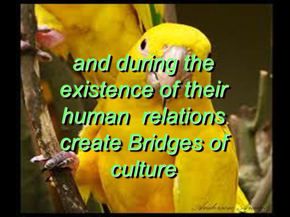 and during the existence of their human relations create Bridges of culture